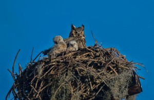 TGO Owl 4