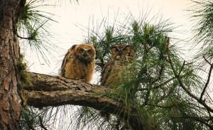 TGO Owl 8