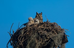 TGO Owl 3