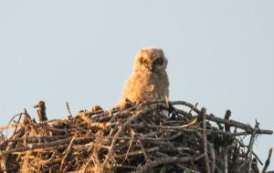 TGO Owl 5